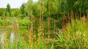 Reasons for a Stormwater Detention Pond Retrofit